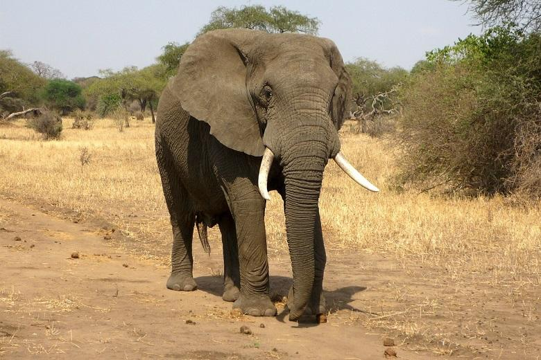"""Drought-stricken Namibia sells 170 elephants that """"threatened humans"""""""