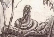 Has a snake ever swallowed an elephant?