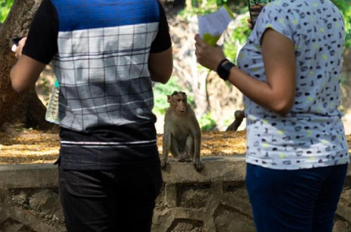 Monkeys become misogynists