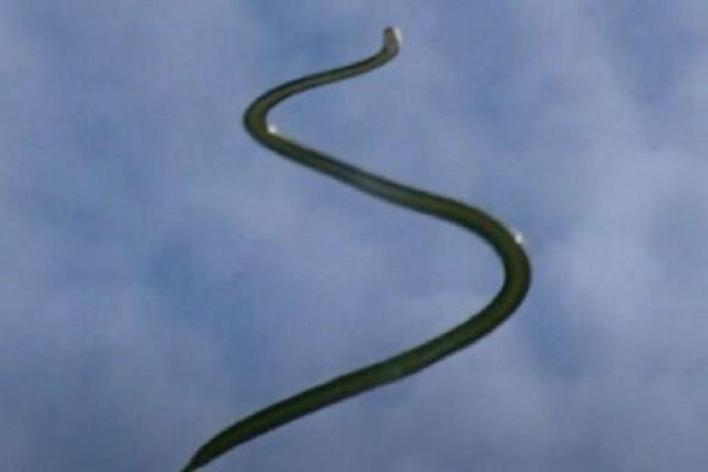 The flying snake without wing... How?