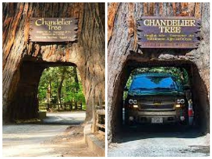 Five unusual structures you may see in giant trees