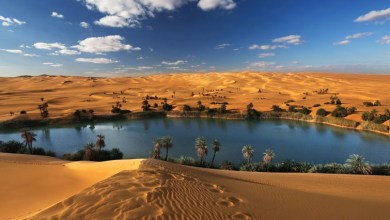 Who created oases? Oldest, most extensive and facts about islands in the desert