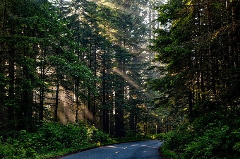 What will become of a planet without trees?