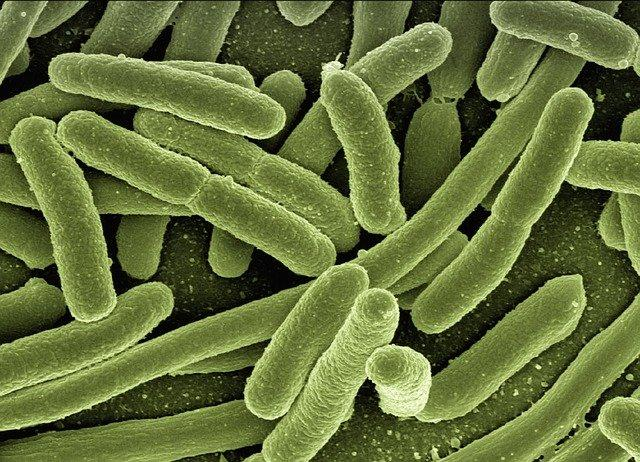 Good bacteria mitigate side effects of cancer