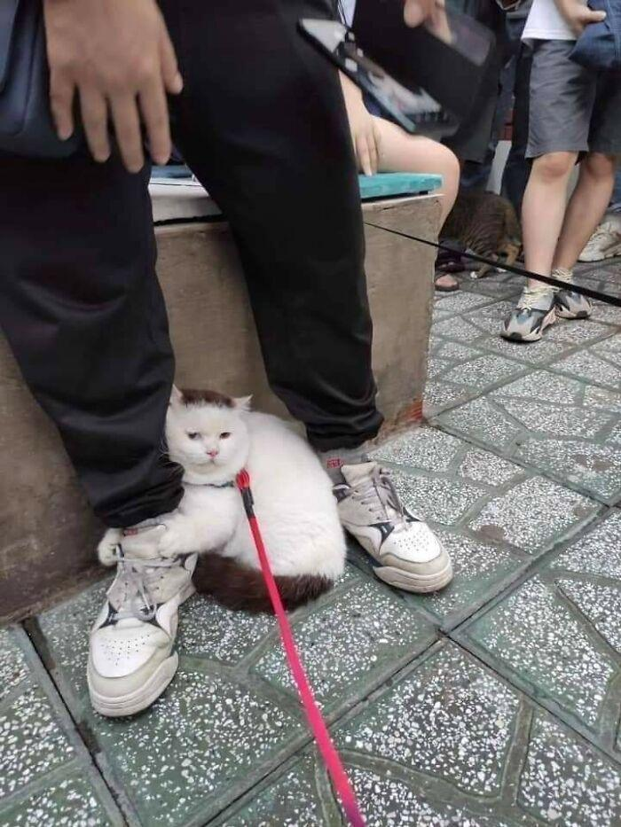 The cat doesn't want to walk anymore