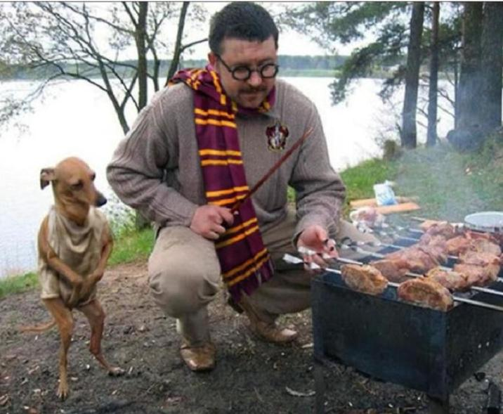 Harry Potter and Dobby are not the same