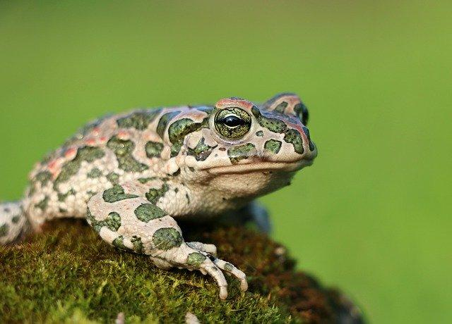 Frogs have lost their teeth more than 20 times throughout history