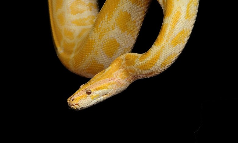 Snake bites man in the private parts while sitting on the toilet