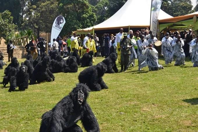 Kwita Izina young Gorillas naming ceremony