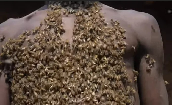 Bee bearding: Man claim to be 'king of bees' and posses power to control them