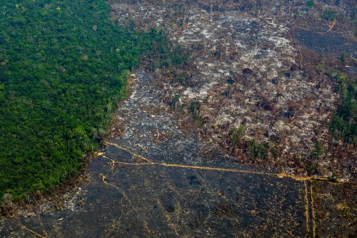 Amazon rainforest before and after: 10,476 square km disappeared in a year