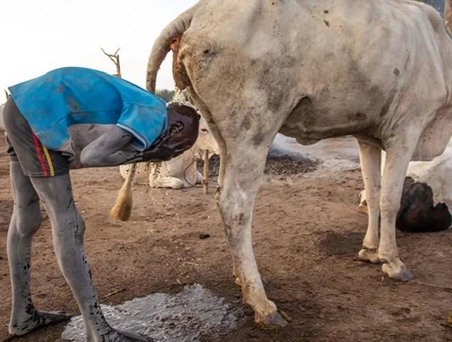A Mundari tribe bathing with cow urine