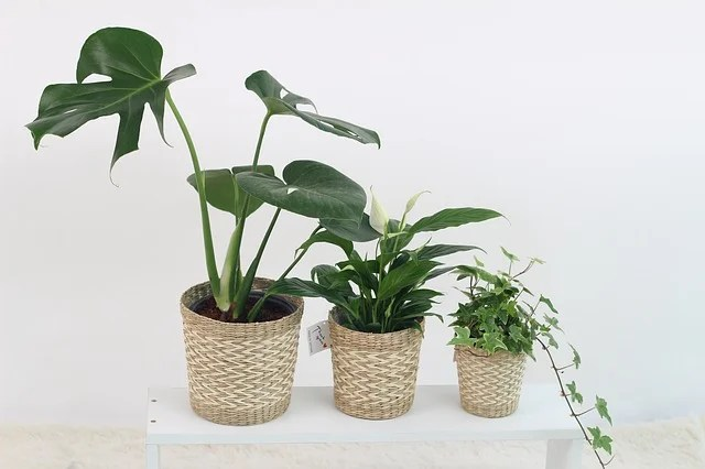 Five houseplants to help manage stress
