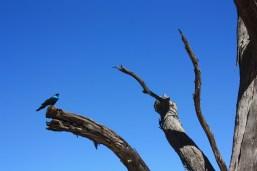Dans la parc national de Waterberg / In Waterberg National Park