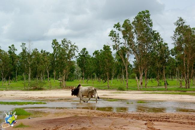 Savane de Casamance