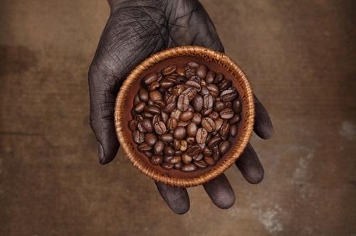 Café produit au Kenya