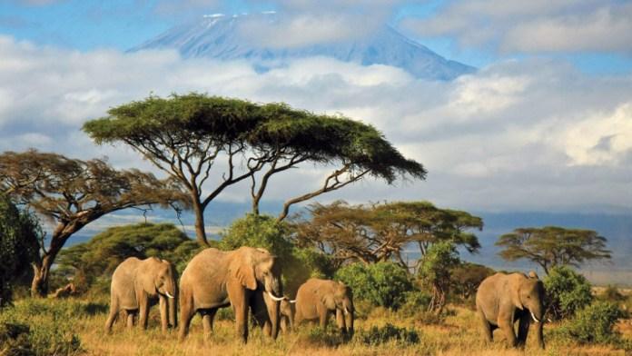 safari_masai_marai
