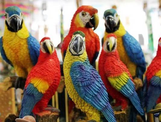 Les perroquets ANIMAUX LES PLUS INTELLIGENTS AU MONDE
