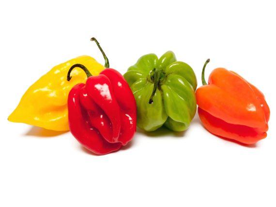 Habaneros pepper