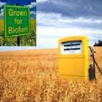 Gli effetti collaterali del boom dei biocarburanti in Africa