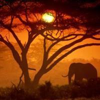 Africa, in 12 anni raddoppiano i turisti