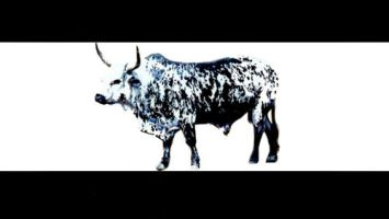 EDM Zantsi - The Nguni