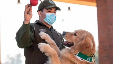 Photo of Chilean Police train dogs to sniff out Coronavirus