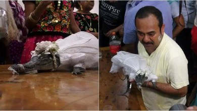 Photo of Mexican Mayor marries CROCODILE. Here's why