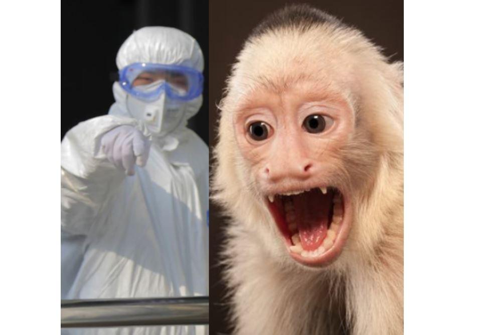 Un vétérinaire chinois de 53 ans décède du virus mortel du singe B après l'avoir attrapé en laboratoire