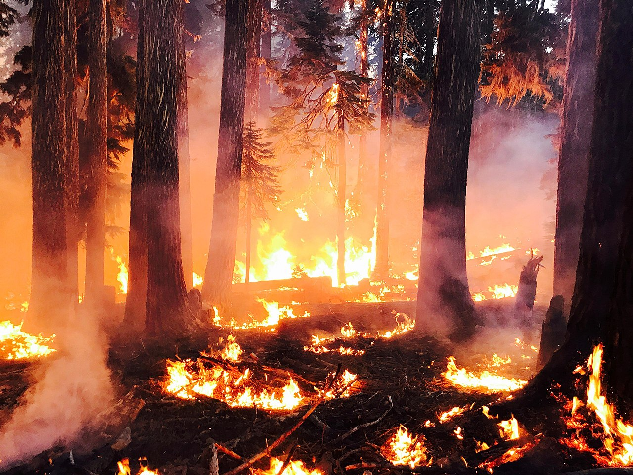 Blanket Creek Fire During Night Ops Date 2 August 2017 Source https-::inciweb.nwcg.gov:incident:photograph:5503:39:68765: Author US Forest Service