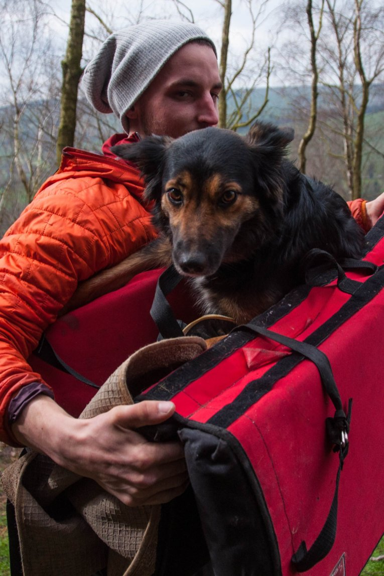 Evie with a her hero Pymn carrying her off with her injured paw.