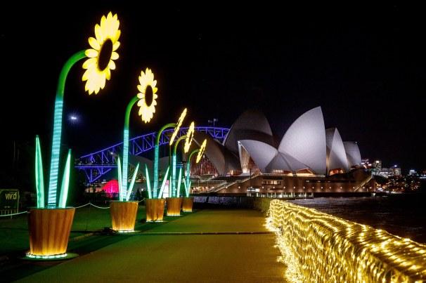 VividSydney2017_RoyalBotanicGardens_TheSunflowers_Destination NSW_James Horan 0001