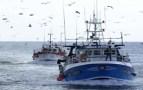 بعد الدواجن: الاتحاد الأوروبي يفتحص منتجات الصيد البحري بأكادير.