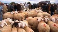 تعرف على طرق الغش التي يستخدمها تجار الماشية قبل شراء أضحية العيد