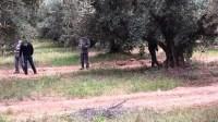 العثور على جثة فلاح مشنوق معلقة بشجرة زيتون قبيل صلاة الجمعة تستنفر الأجهزة الرسمية
