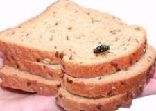لهذا السبب تخلص فوراً من طعامك الذي لمسه الذباب
