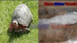 صادم..العثور على سلحفاة بها طلاسم سحرية داخل كفن امرأة خلال دفنها ببنسليمان