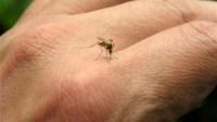 نصائح هامة للوقاية من البعوض و الناموس في فصل الصيف