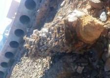مهزلة بسيدي إفني: الفتك بحرمة الأشجار خدمة لصفقة تبليط مغشوشة (+صور).