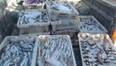 رغم مراقبة وزارة أخنوش المشددة.. تهريب الأسماك، حتى الفاسدة منها، بميناء أكَادير يتواصل