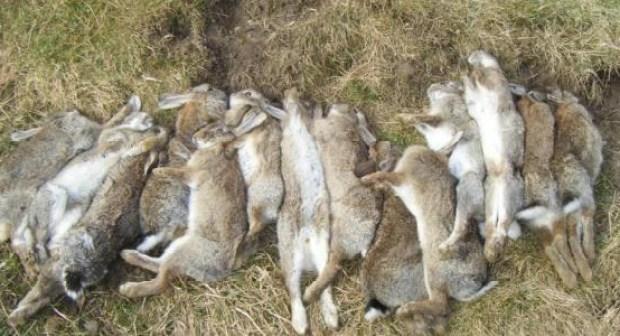 الفايسبوك يقود إلى توقيف ثلاثة شبان بأكادير يفتخرون بصيدهم لارنب وحشي باستعمال العصي