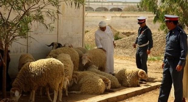 """مثير:مواطنون يحاصرون عصابة فراقشية داخل """"اسطبل"""" باشتوكة"""