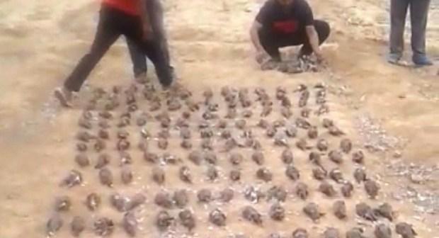 """+فيديو: """"يمام"""" تارودانت مهدد بالإنقراض بأيادي خليجية، و الجهات الوصية تلزم صمت القبور."""