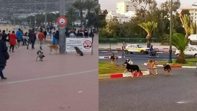 جحافل الكلاب الضالة تجتاح مدن وقرى سوس وتثير مخاوف الساكنة