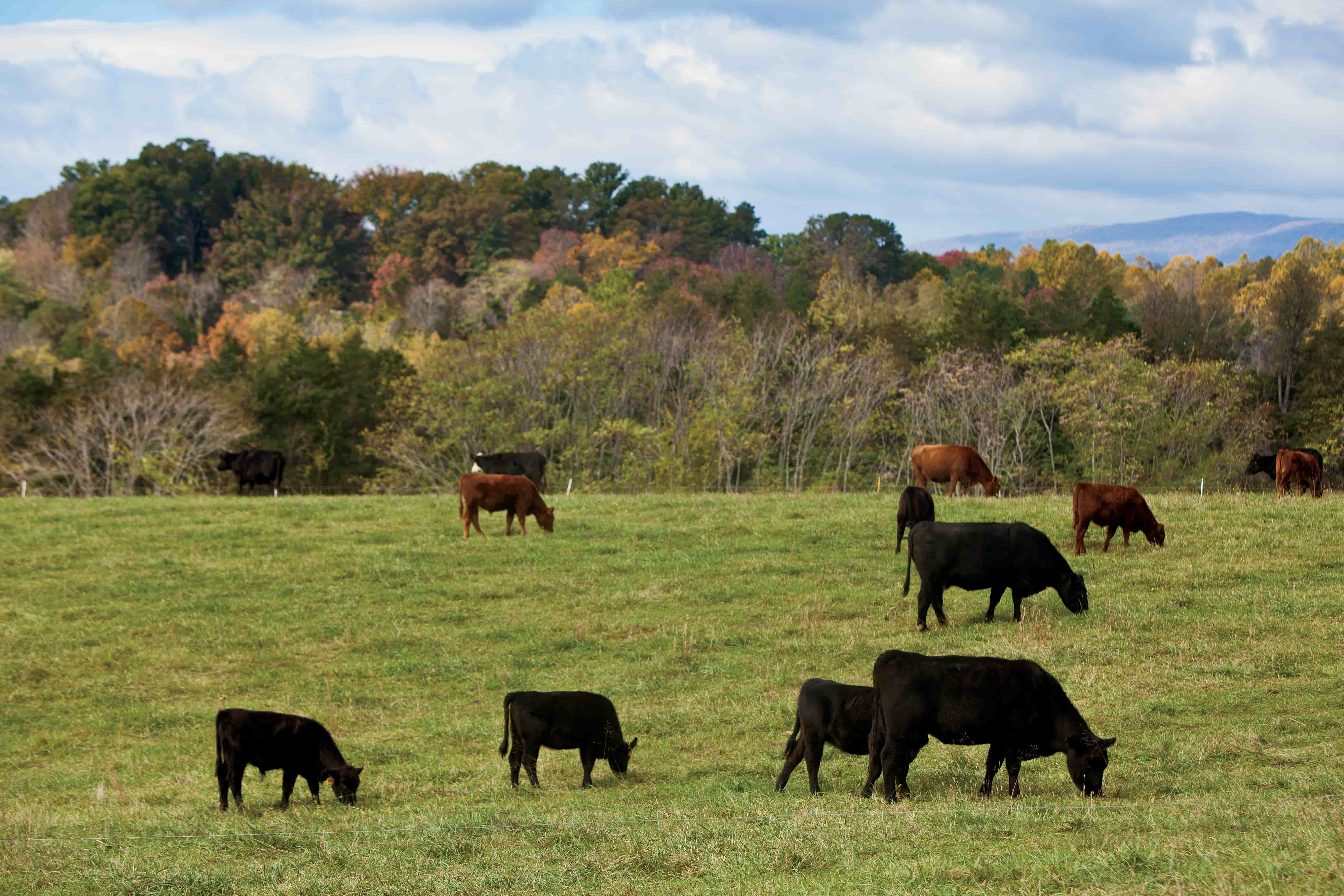 Celebrating National Beef Month And The U S Beef Industry