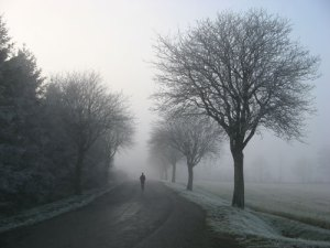 Picture of foggy, bleak winter day