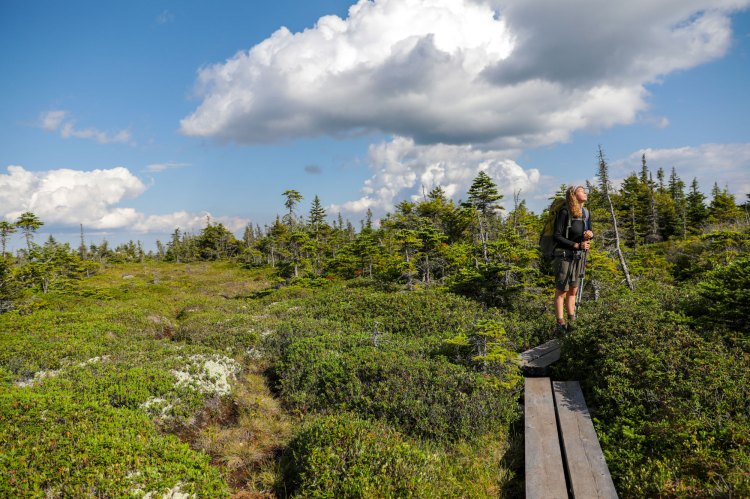 Soaking up the sun on a mountaintop bog.