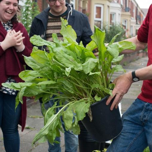 large-leafed-herb-1