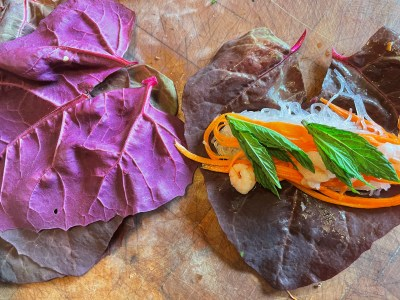 filling orach leaves