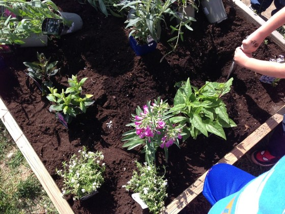 kindies planting2